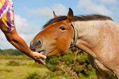 Feeding a horse by hand