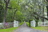 picture of canopy  - The oak canopy and gated entrance to a southern plantation in the Carolinas - JPG