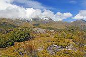 Alpiner Vegetation unterhalb der Wolke gehüllt Peaks