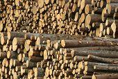 Registros de madeira