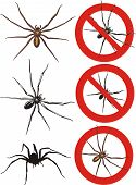 spider - warning signs