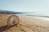 nautilus shell on the issyk-kul beach sand with mountains on background