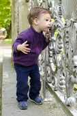 Curious Child At Gate