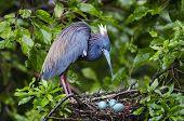 Bird And Three Eggs
