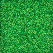 Green grass background. Grass texture. Green grass field