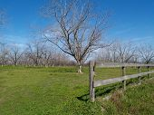 image of pecan tree  - Board fence beside a pecan grove in Thomas County south Georgia during the winter - JPG