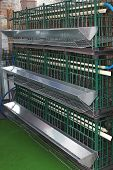 picture of egg-laying  - Hen cages for laying eggs at farm - JPG
