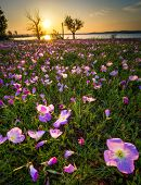 Sunrise Over A Lake And Wildflower Field