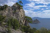 Pines On Coastal Rocks.