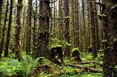 Mossy Forest with tall trees