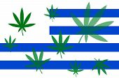 Flag of Uruguay with a cannabis leaf. Uruguay becomes first country to legalize marijuana trade