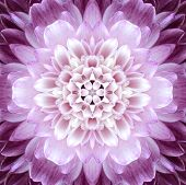 foto of chrysanthemum  - Pink Concentric Flower Center Macro Close - JPG