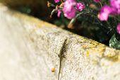 Lizard Climbing Up A Wall