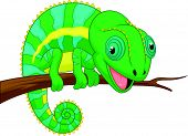 Cute chameleon cartoon