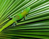 Gecko In Hiding