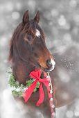 Dreamy image of an Arabian horse with a Christmas wreath