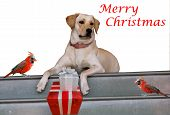Christmas Card with two cardinal birds and a dog with gifts