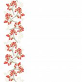 rowan berry mountain ash berries beautiful delicate autumn season seamless vertical border on white