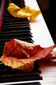 Autumn leaves on the keys