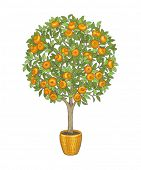 Mandarin tree in flowerpot, hand drawn color illustration.