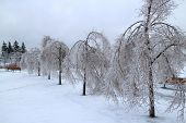 Trees covered in ice after a major winter storm