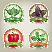 Set of vector labels with vegetables and herbs. Vector eps 10.