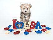 I Love U.s.a. Puppy
