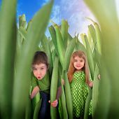 Children Hiding In Healthy Green Bean Grass