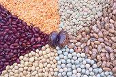 stock photo of soya-bean  - view of beans - JPG