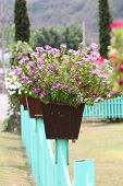 Colorful Flowers On Potted Plants.