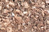 Coconut Husks Minced For Mix Soil In Cultivation.