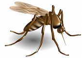 picture of gnats  - mosquito tiger isolated on a white background - JPG