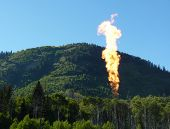 Flaring and Forests
