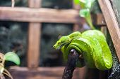 foto of garden snake  - Green snake on a branch in Thailand