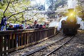 Forest train on railway with sakura in Alishan National Scenic Area