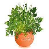 Fines Herbes In Embossed Terra Cotta Flower Pot