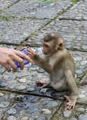 Little Monkey Drinks Water From A Bottle