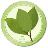 Bay Laurel Herb