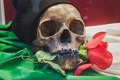 Skull With Rose Between Its Teeth At Militalia In Milan, Italy