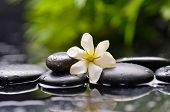 gardenia flower on pebbles with green on plant �¢�?�?wet background