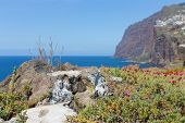 Beautiful Coast With Cliffs Of Madeira Island, Portugal