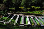 Trout farm at Ribeiro Frio, Madeira, Portugal