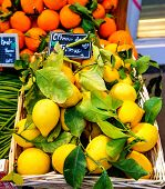 oranges and lemon with price tags at fruit market