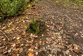 Fall Leaves And Stump