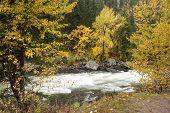 River Between Yellow Trees.