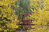 Bridge Between Yellow Trees.