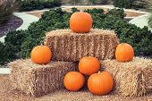 Pumpkin Arrangement On Hay Bales