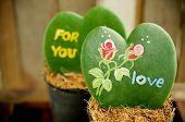 Heart Shaped Plant (kerrii Hoya)