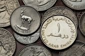 Coins of the United Arab Emirates. Sand Gazelle (Gazella subgutturosa marica) depicted in an UAE dirham coin.