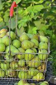 Sale Pears In Basket On Market